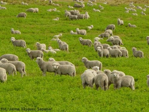 Brama owiec