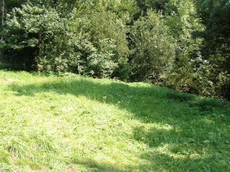 Zielony dach na zielonych pastwiskach