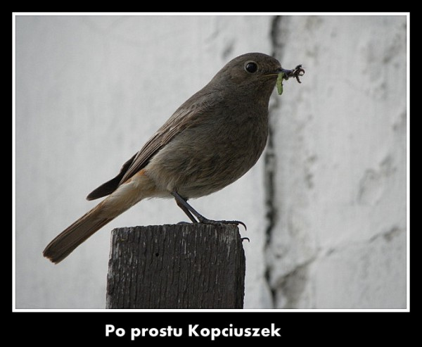 dzien_dziecka_7.jpg